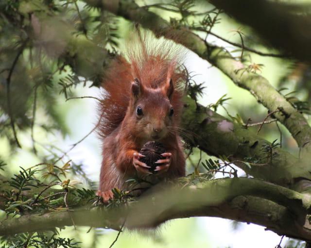 L'écureuil a faim