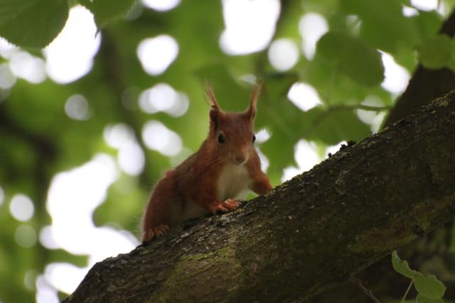 L'écureuil en escalade