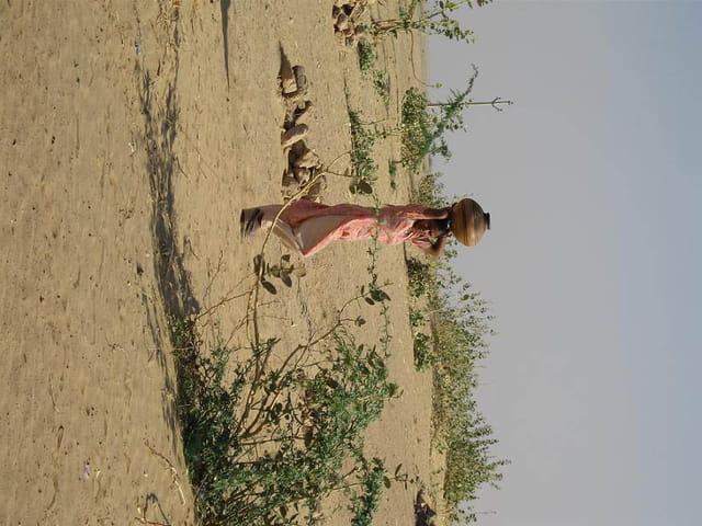 L'élégance dans le désert