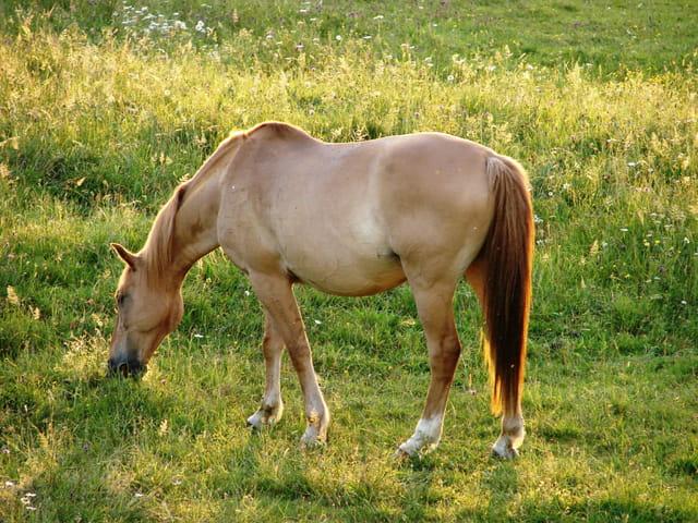 L'élégance du cheval