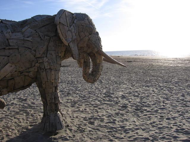 L'éléphant à la mer