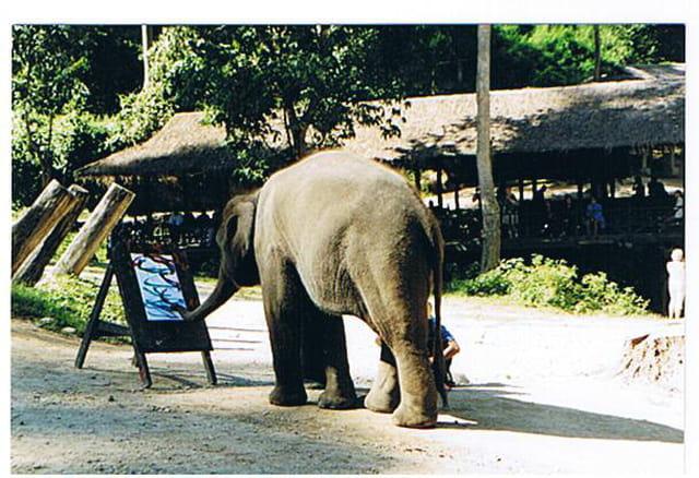 L'éléphant artiste peintre