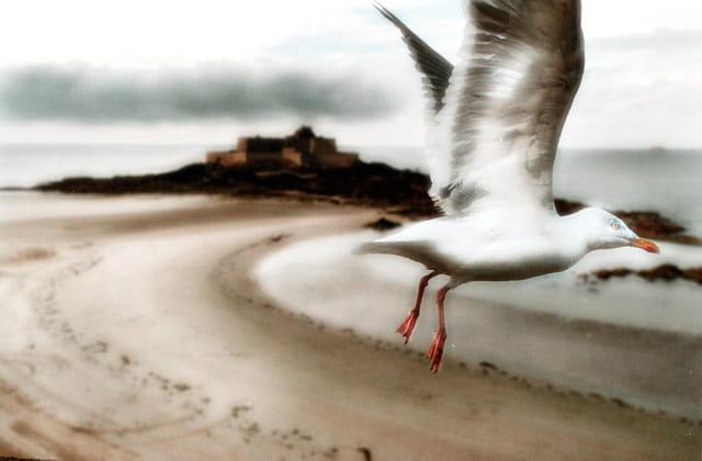 L'envol sur Saint Malo
