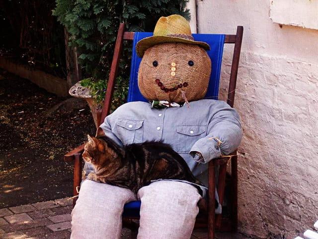 L'épouvantail et le chat