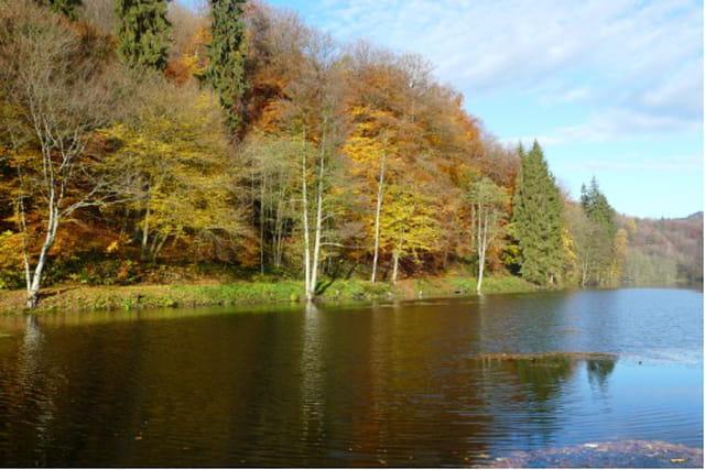 L'étang de Jaegerthal