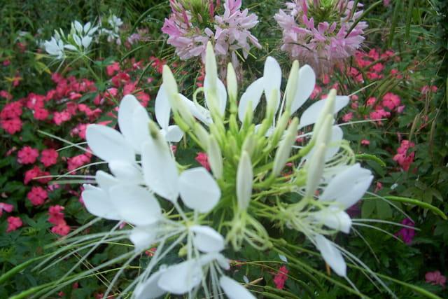 l'été en expansion florale