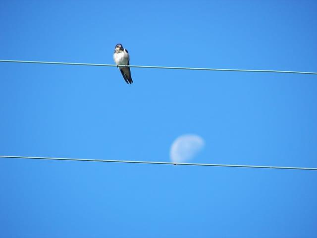 L\'hirondelle et la lune