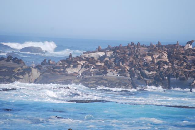 L'île aux otaries, l'île Duiker