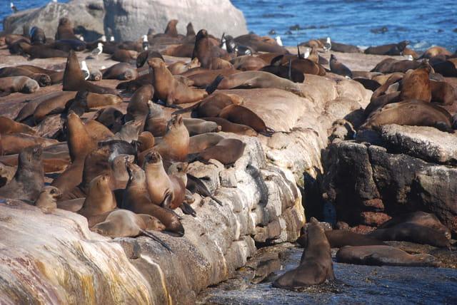 L'île aux phoques