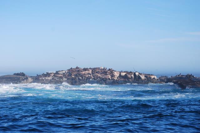 L'île Duiker l'île aux otaries