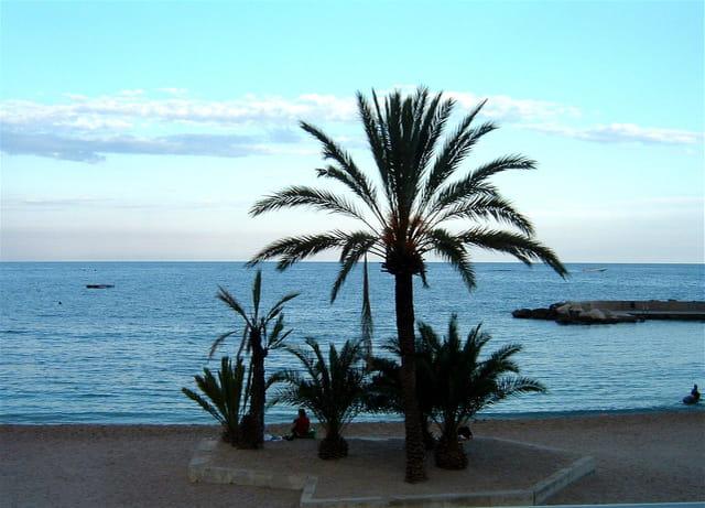 L'oasis sur la plage