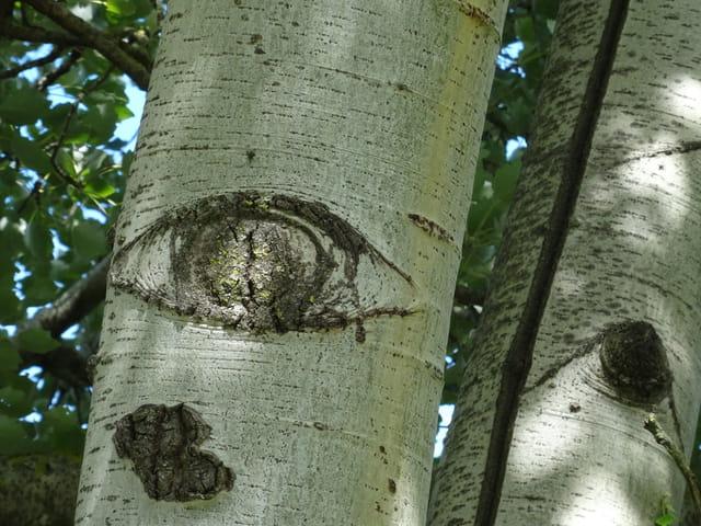 L'oeil de l'arbre