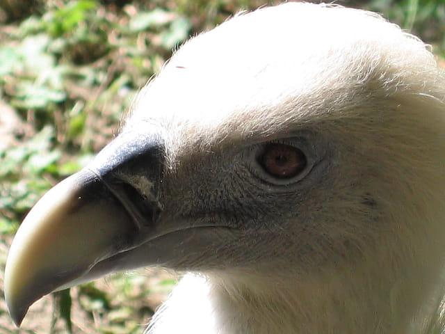 L'oeil du vautour