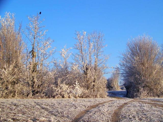 L'oiseau en hiver