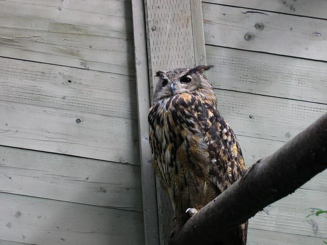 L'oiseau gardien du parc