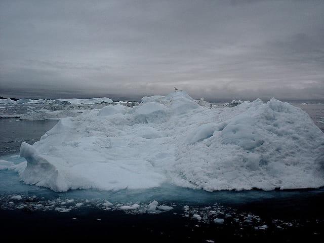 L'oiseau sur son iceberg