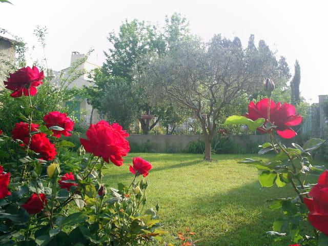 L'olivier et les roses