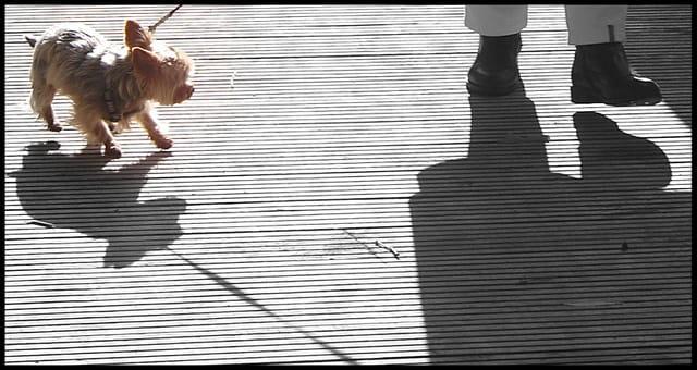 L'ombre.....