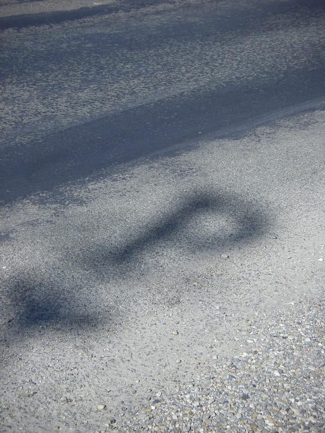 L'ombre d'un grand cru