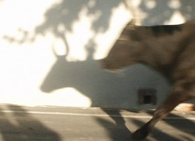 L'ombre du TORO!