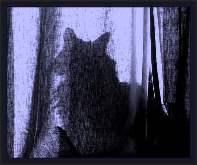 L'ombre féline