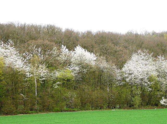 L'orée du bois au printemps