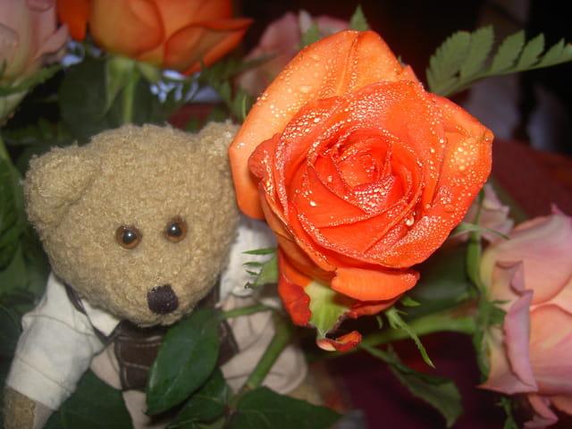 L'ours et la rose