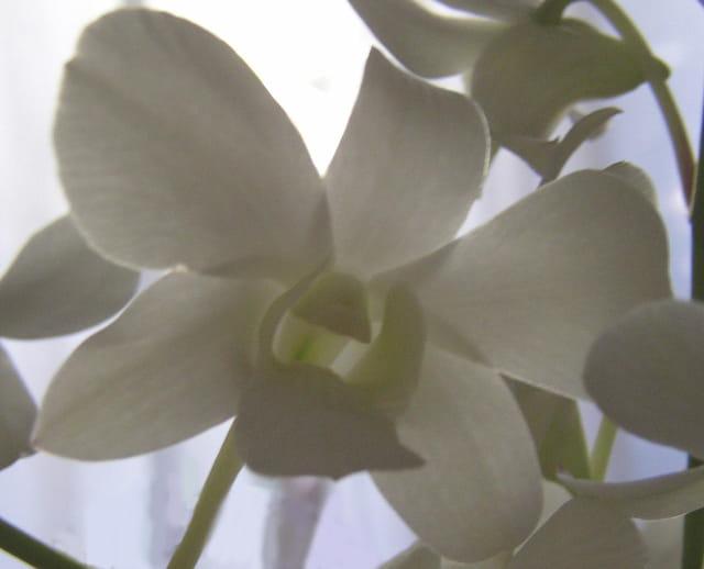 La belle de Sngapour