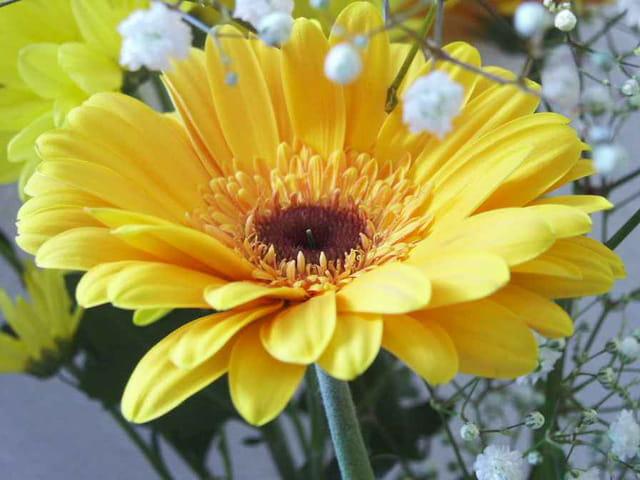 La belle jaune
