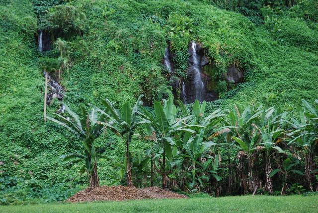 la belle nature de l'Anse des Cascades