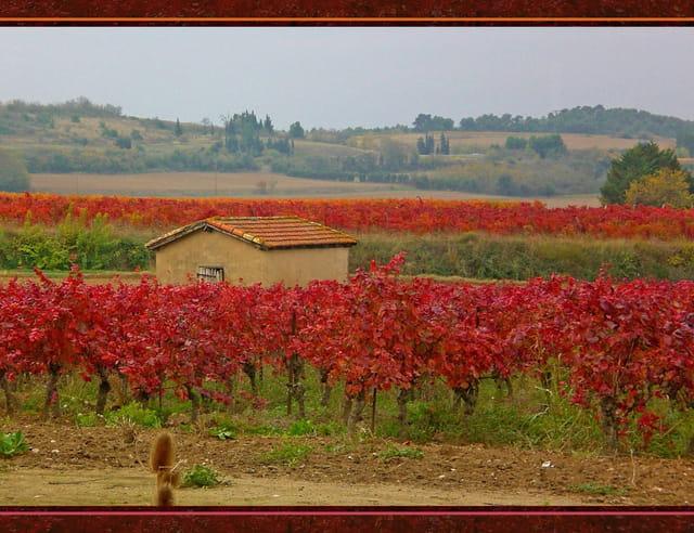 La cabane de vigneron