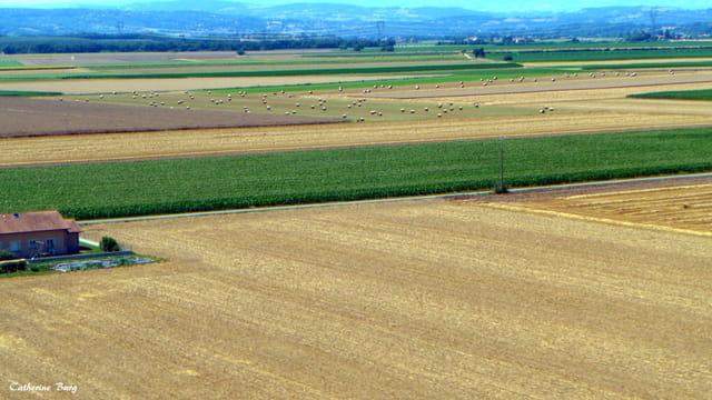 La campagne lyonnaise