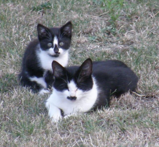 La chatte et son chaton