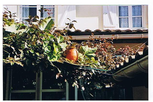 La citrouille sur le toit