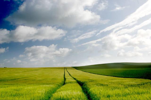La colline et le champ