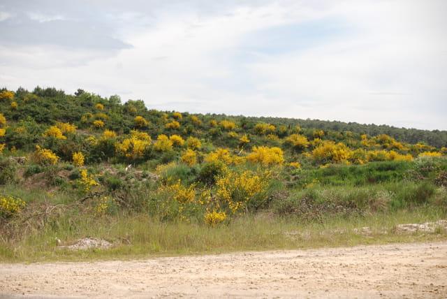 La colline fleurie