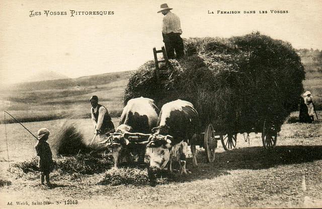 La Fenaison dans les Vosges.