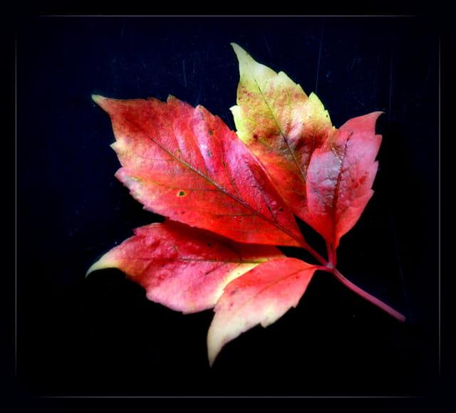 La feuille d'automne....