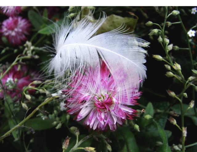La fleur a la plume