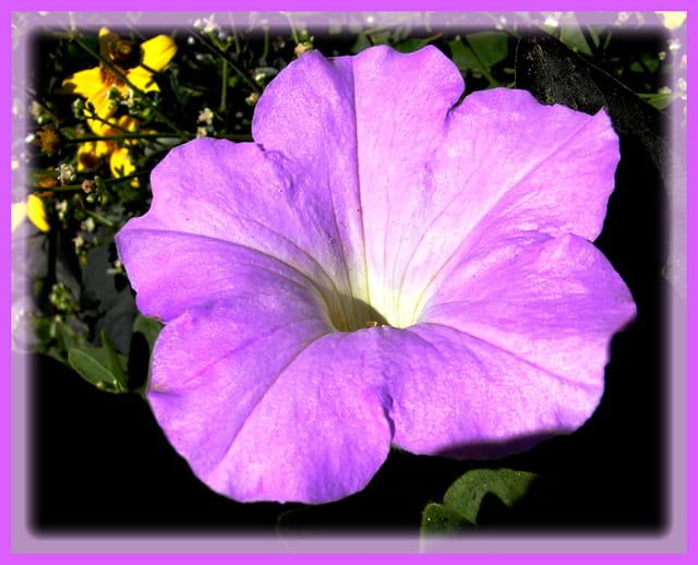La fleur fleur