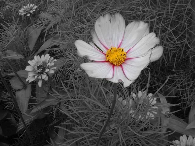 La fleur s'anime