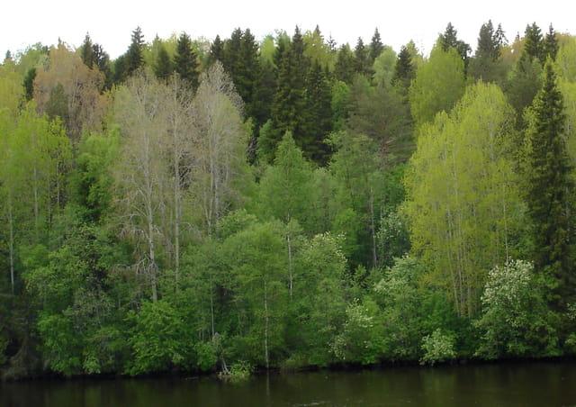 La forêt couleur printemps