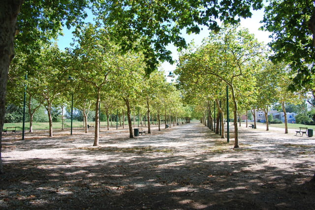 la forêt dans la ville