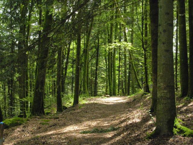 La forêt Haute-Saônoise