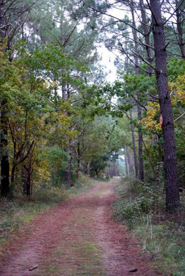 la forêt landaise en novembre