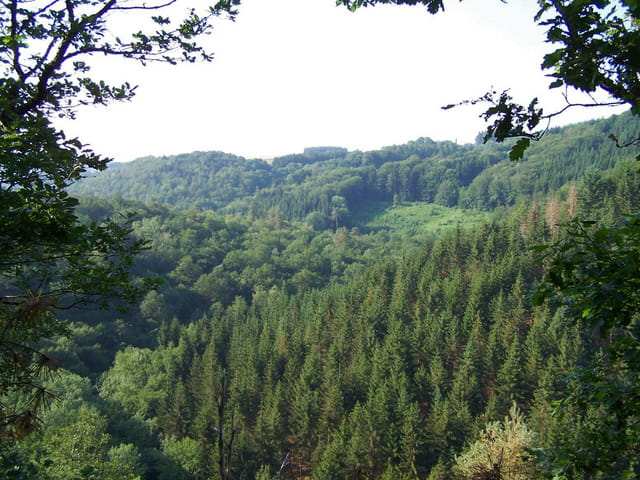 La forêt morvandelle