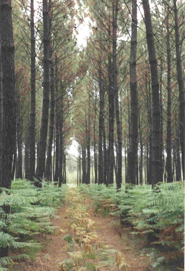 La forêt nous protège