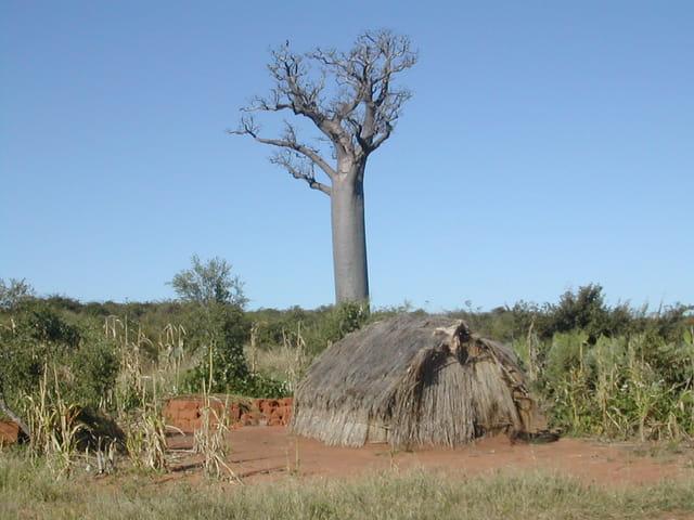 La Hutte et le Baobab