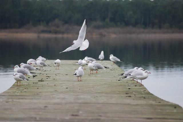 la jetée appartient aux oiseaux l'hiver