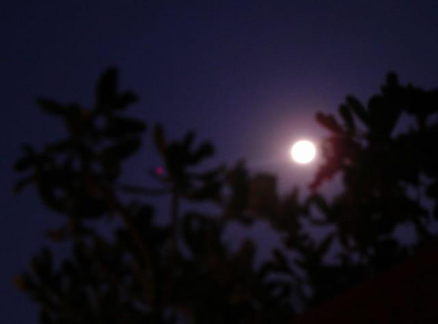 La lune au petit jour